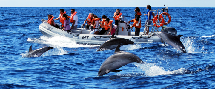 Azores Wahle and Dolphin watching